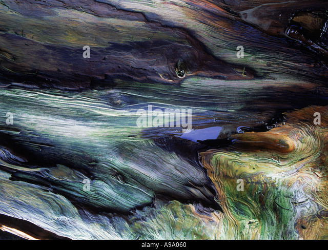 Artistic colors and designs on fallen pine tree or driftwood along California Coast - Stock Image