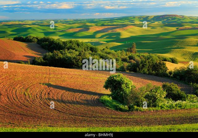 Farm fields from Steptoe Butte in the Palouse region of eastern Washington state - Stock-Bilder