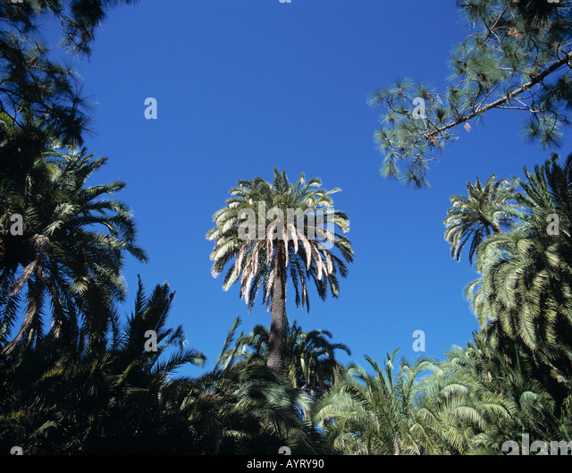 Palmitos park canary islands stock photos palmitos park - Standing canarias ...