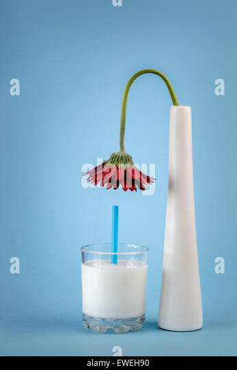 Flower in Vase bending over a glass of Milk - Stock Image