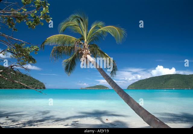 US Virgin Islands St. John Virgin Islands National Park Maho Beach & Bay leaning palm Whistling Cay beyond USVI013 - Stock Image