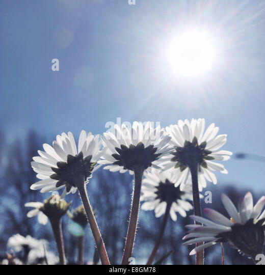 View of flowers - Stock Image