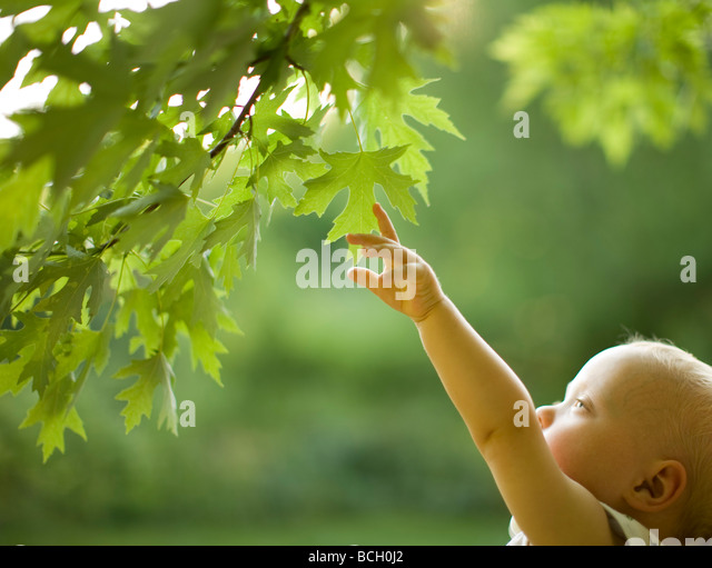 Baby boy reaching for leaves on a tree - Stock Image