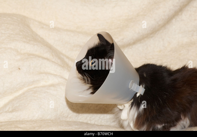 how to keep a buster collar on a cat