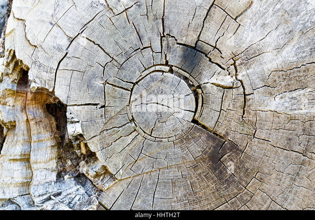 Texture of decayed tree rings for background use - Stock Image