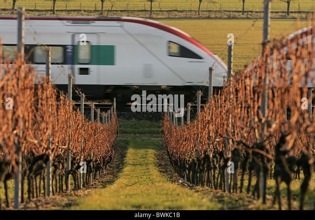 ICN road railway intercity tilting train vineyard shoots wine wine area railroad Swiss Federal Railways trai - Stock-Bilder