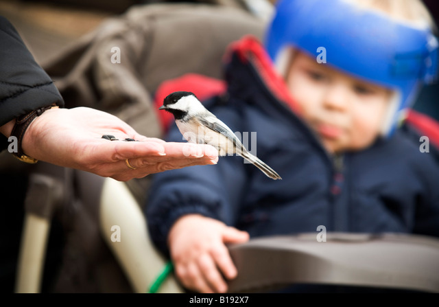 A bird eating out of a person's hand - Stock Image