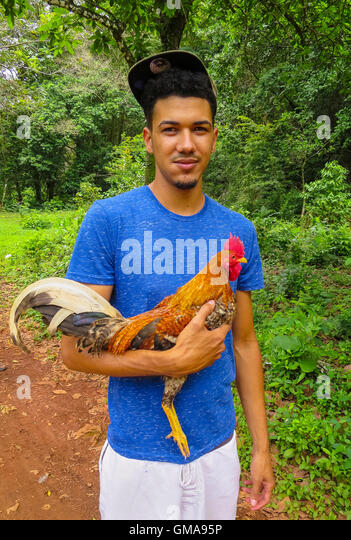 CABARETE, DOMINICAN REPUBLIC - Young man holds cock fighting rooster. - Stock Image