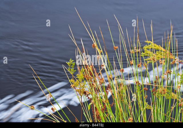 Reeds in river stock photos reeds in river stock images for Grow landscapes christchurch
