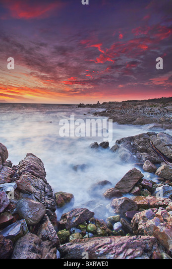 African Penguin (Spheniscus demersus) colony in background with clouds tinted in glorious sunset colours. - Stock Image