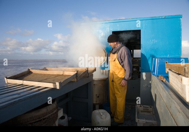 Commercial Seafood Shellfish Shrimp Fishing with modified tractor vehicle, Southport Merseyside uk - Stock-Bilder