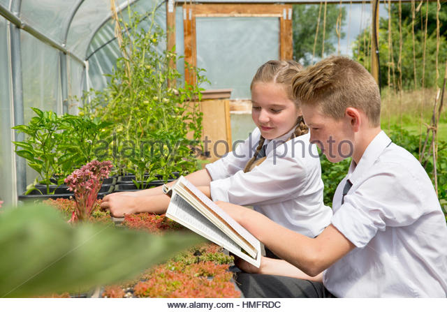 Middle school students with notebook, learning gardening in sunny plant greenhouse - Stock-Bilder