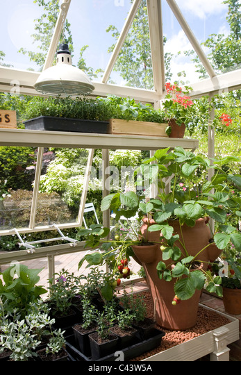 Greenhouse Bench Stock Photos & Greenhouse Bench Stock ...