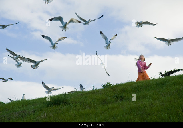 A girl (4-6) feeding sea gulls on a grassy slope. - Stock Image