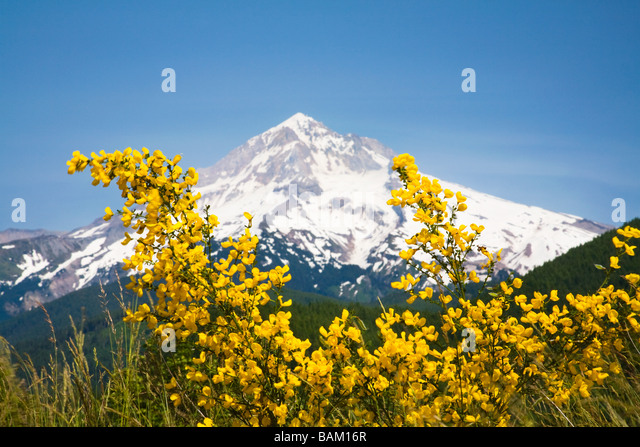 Lolo pass and mount hood - Stock Image