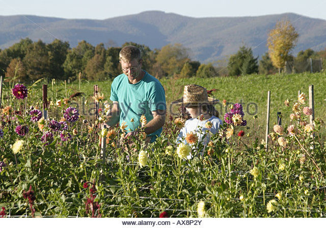West Virginia Frankford father daughter cultivated flowers - Stock Image