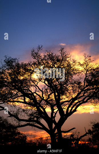 South Africa sunset in the bush - Stock Image