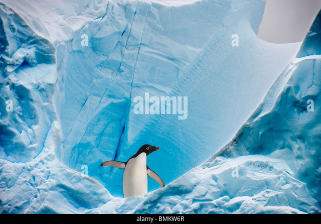 Adelie Penguin on iceberg, Graham Passage, Antarctic Peninsula, Antarctica. - Stock Image