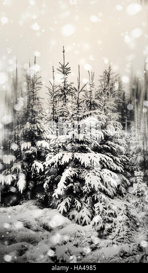 Beautiful winter landscape in the forest - Stock Image
