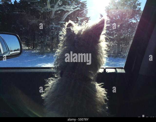 Road Trip for Muffin - Stock Image