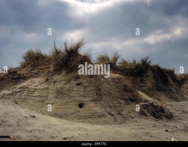 Sand dune at East Head, West Wittering, West Sussex - Stock Image