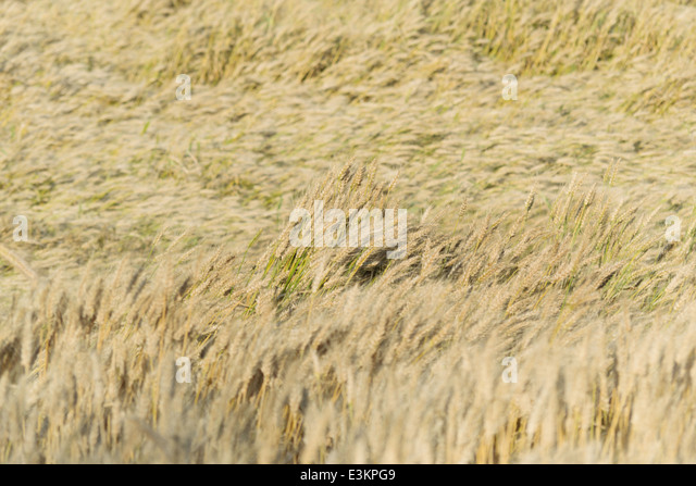 cropland - Stock Image
