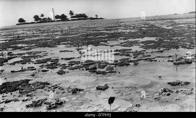 Photograph of reef flat with lighthouse in the background. - Stock-Bilder