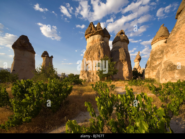 Vineyard Camel at Gorome Valley of Zelve Cappadocia Turkey - Stock Image