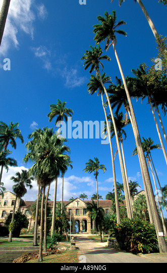 Barbados Codrington College national landmark with palm tree roadway - Stock Image