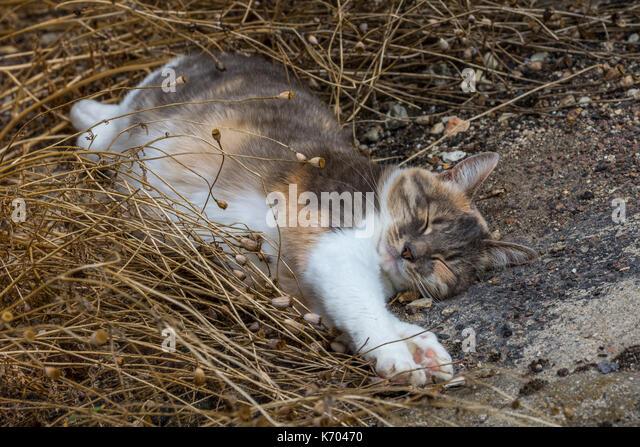 Sleeping cat - France. - Stock Image