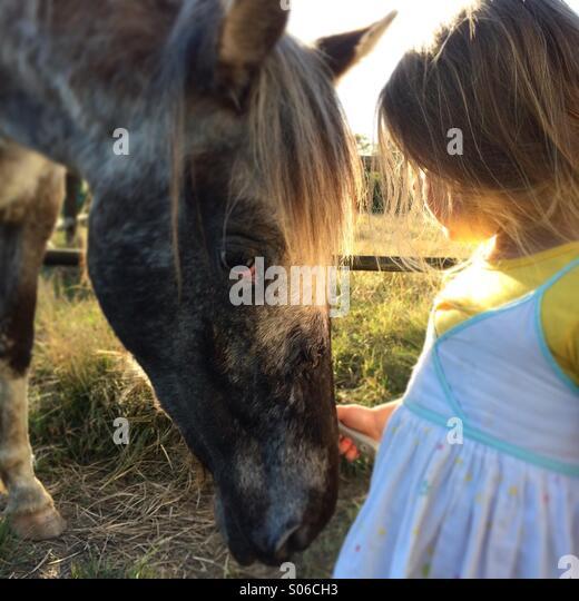Horse whisperer - Stock-Bilder