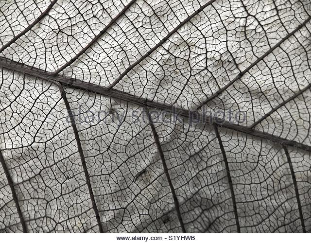 Macro view of a leaf. No filter used - Stock Image