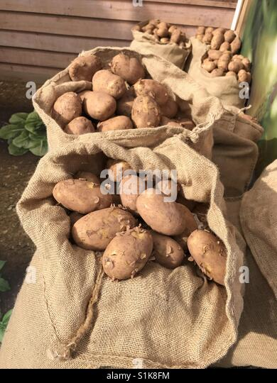 Sacks of potatoes on display at the Royal Welsh Show, one of the largest agricultural shows in Europe (date taken: - Stock Image