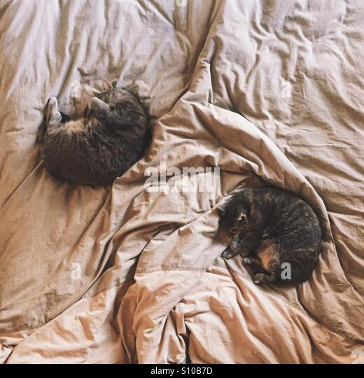 Cats on Bed - Stock Image