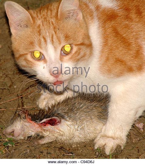 Ferrel Cat Food