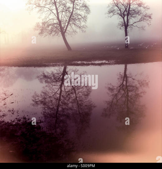 Trees reflected in early morning fog - Stock Image