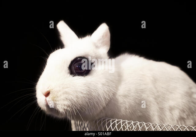 White rabbit in basket - Stock Image