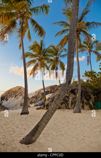 Virgin Gorda, British Virgin Islands in the Caribbean Palm trees on the beach among the granite boulders at The - Stock Image