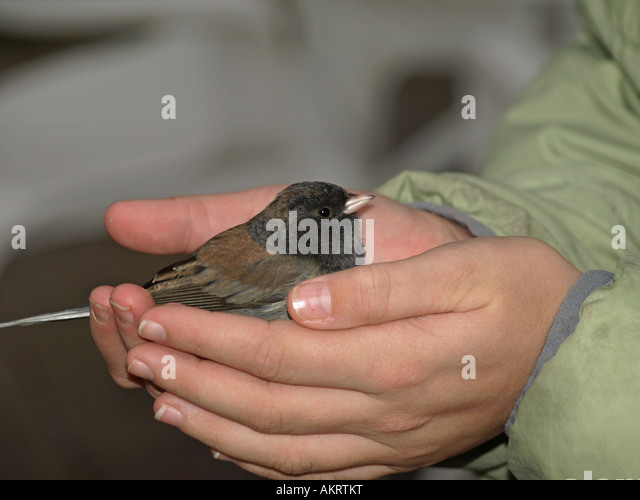 a bird in hand is worth two in the bush If someone says, a bird in the hand is worth two in the bush, he/she means that  it is better to be satisfied with something you have than to risk.