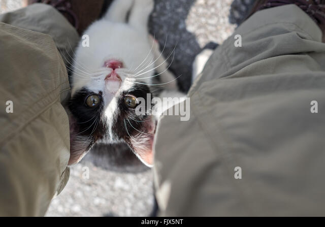 High Angle Portrait Of Cat With Low Section Of Man - Stock Image