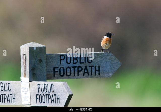 Stonechat saxicola torquata on footpath sign Minsmere Suffolk April - Stock-Bilder
