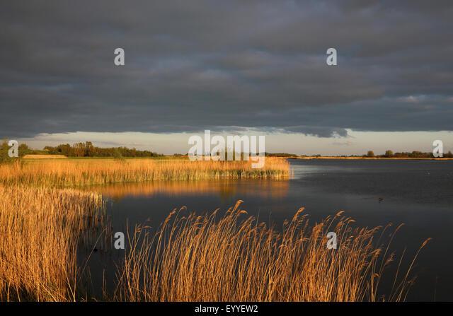 evening mood at a lake at the Ijsselsea coast near Makkum, Netherlands, Frisia, Makkum - Stock Image