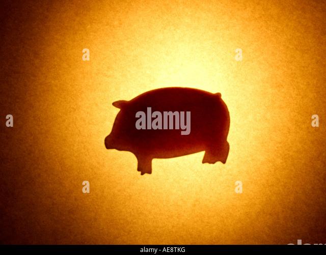 Pig Animal - Stock Image