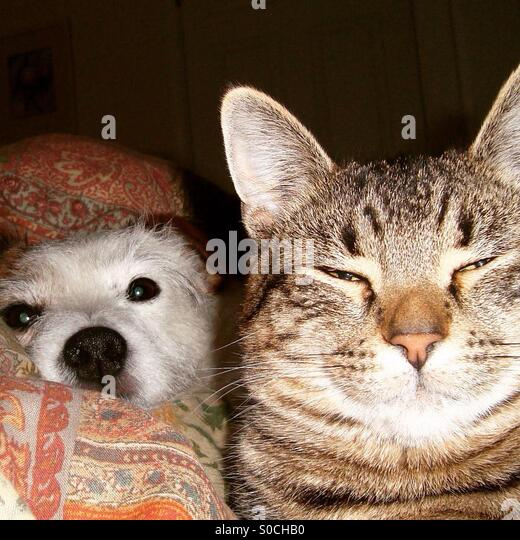 Cat and dog friends laying together - Stock-Bilder