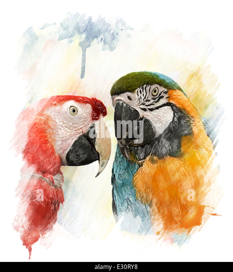 Watercolor Digital Painting Of Two Colorful Parrots - Stock-Bilder