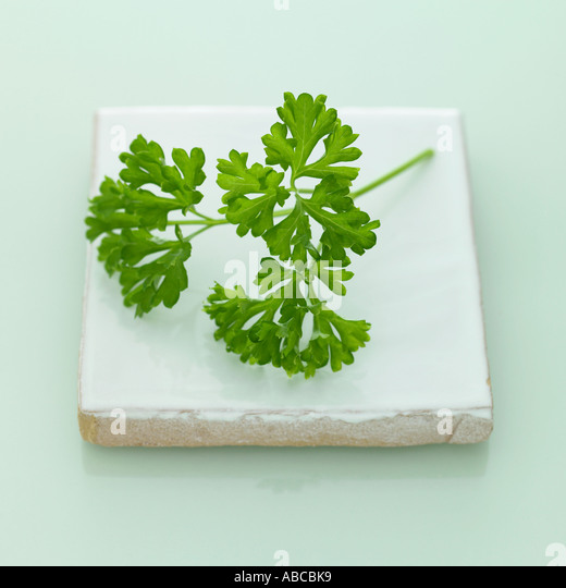 Parsley - one of a series of similar herb images - Stock Image