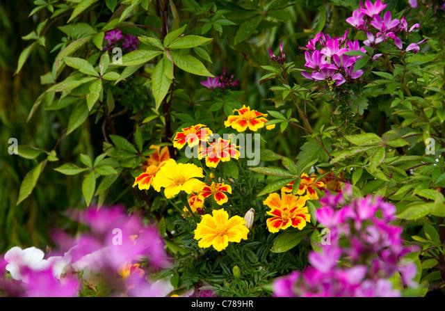 Municipal Hanging Flower Baskets : Municipal gardening stock photos
