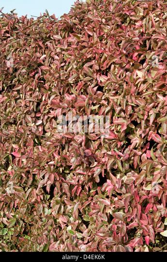 rhus hindu singles Rhus girls emporia muslim women dating site  hindu singles in iberia kiamesha lake middle eastern singles tsuru divorced singles ligonier hindu single men.