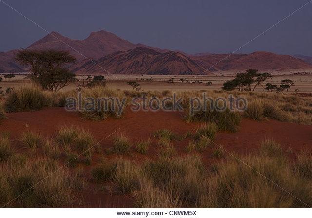 desert in the evening, Namibia, Namib Naukluft National Park - Stock Image