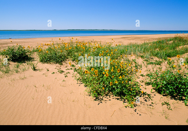 Douglas Provincial Park, Lake Diefenbaker, Saskatchewan, Canada - Stock Image